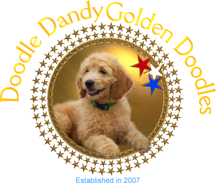 Doodle Dandy Doodles